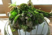 miniature aqua