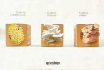 Products / have your own mushrooms garden!