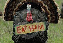 Thanksgiving / by Gail Napoliton Wilson