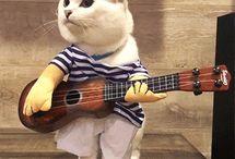 Cat GIF'S
