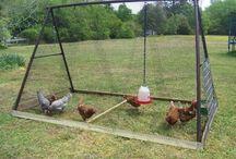 Outdoor DIY for Animals
