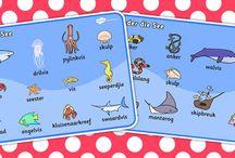 Grade 2 - Under The Sea