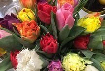 Fleurs de saison : Février / Fleurs de saison du mois de février