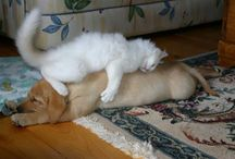 Kedi & Köpek