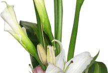 flores de jarros