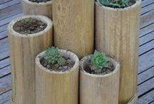 Bamboes