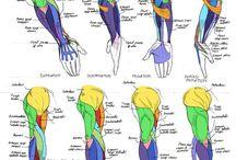 Anatomie inspiration