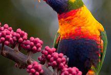 Beautiful Birds I See