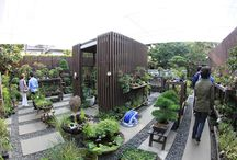 garden bonsai