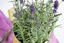 Herbs & Plants / Come utilizzare le erbe e le piante in cucina nei vostri piatti.