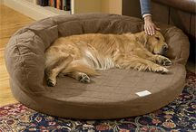Dog Beds / Dog Beds / by Niamh Ryan