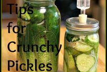 Fall & Winter Faves / The best fermenting recipes for cold months.