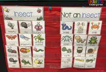 pre-school: insects