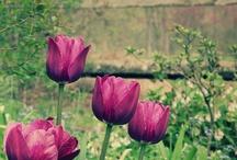 flowers / by Mau Mau