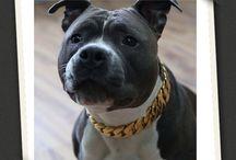 Gold Collars