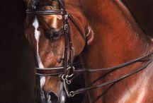 Paarden met kleurvoorbeelden