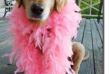Doggie Divas / by Tammy Tadd