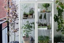 Orto e fiori terrazzo / Decorazioni piante fiori ortaggi serre panche sedie tavolino arredi decori esposizione...tutto per la terrazza