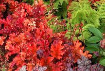 Árnyékos kertek - Shade Gardens