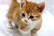 Katteunger<33