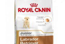 Buy #Royal_Canin Labrador Junior - 12 Kg
