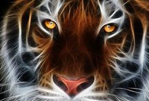 Gorgeous Art / Amazingly Art Of Animals