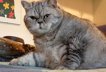 cats and related / cats in history, personality of cats, amazing cats...