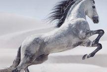 horses my hobby