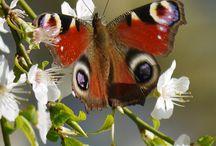 insektenschönheit