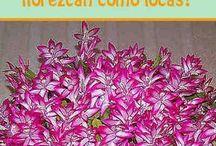 Floresencia