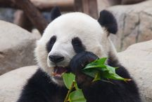 Google Panda / Resources about how to survive and thrive after the next Google Panda update, or how to recover from a Panda hit.