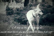 I'm a dog lover!❤