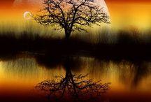 Amazing Nature  / by Karensangel