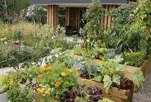 Dans mon petit jardin