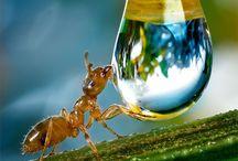 """""""Ant's"""""""