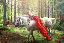 Horse/Rider Session