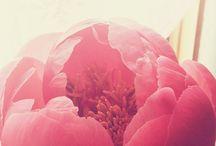 floral design   inspiration / flowers. nature's art. so beautiful!