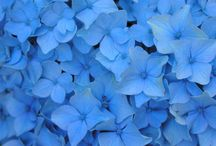 Fun With Colors: Blue