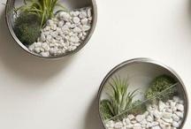 PLANTITAS / PLANTAS Y JARDINES