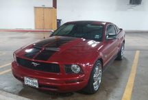 Used 2009 Ford Mustang for Sale ($15,400) at Austin , TX / Make:  Ford, Model:  Mustang, Year:  2009, Exterior Color: Red, Interior Color: Gray, Doors: Two Door, Vehicle Condition: Good,  Mileage:6,100 mi, Fuel: Gasoline, Engine: 6 Cylinder, Transmission: Automatic.   Contact:512-540-4034  Car Id (56120)