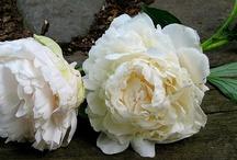 beautiful flowers & gardens