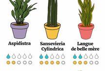 généralités plantes entretien