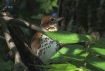 Favorite Birds / by Joanne Ehling Harper