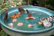 Beautiful insects / Feeding and care
