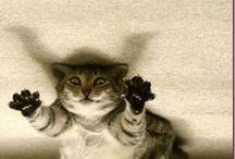 CUTE CATS / aku ga berani pegang kucing sungguhan, tapi kalau foto2 kucing yang lucu.... bole deh :P