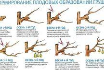 Обрезка деревьев и кустов