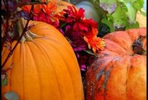 Pumpkins and fall / by Sheila Minnich