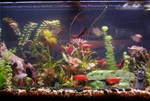 Aquarium Ideas and Design / Aquarium Pictures enjoy :)