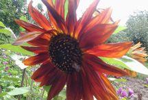 my flowers, my garden