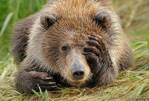 Animals: Bears / Love bears